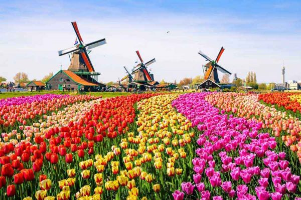 Airport Transfers Netherlands